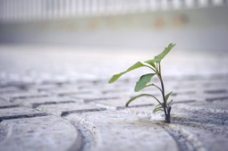 the plant breaks through the asphalt, the concept is, do not be afraid of difficulties